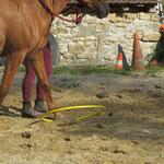 Travail en main - Gérer avec précision les pieds de son cheval - Equitation éthologique