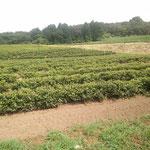 9日。鳥取紅茶の陣構を訪問したことを書きました。