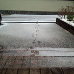 15日。目覚めたら初積雪。すぐに融けました。