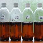 13日。水の硬度による紅茶の味わいの違い。