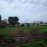 平松牧場。牛がいます。当たり前だけど、うれしい。