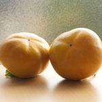 10月2日。庭の柿をとる。