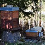 Die anderen Bienenvölker werden wohl neidisch werden.