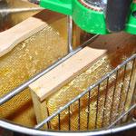Ausschleudern der entdeckelten Honigwaben