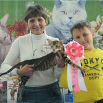 QUEENIE BERSIA (OSH b23)- ориентальная кошка