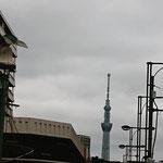 会場近くから見える東京スカイツリー