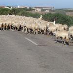 unterwegs Capo Mannu