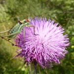 im Hinterland von Umag - viel Natur-