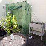 Aufbau von einem Tomatenhaus sowie Hochbeet und setzen von einem Mini-Apfelbaum auf einer Terrasse.