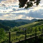 Wunderbare Sicht auf die Rebberge der Südsteiermark vom Weinhotel Gut Pössnitzberg aus.