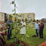 Pflanzung des Gingko auf dem Gelände der Lebenshilfe