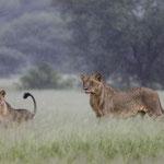 Tanzania 2017, lessen in jagen