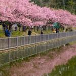 地域賞【桜満開】