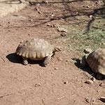 Die Schildkröten von Gonfaron