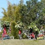 Corvée de bois (ou plutot de branche mais pour quoi faire??) pour les femmes du village