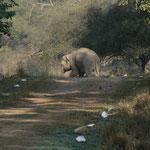 Un éléphan apercu dans le parc national de Rajaji entre Haridwar et Rishikesh