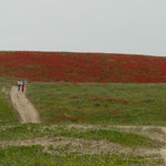 Les coquelicots de Monet, version Ouzbek
