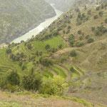 Cultures en terrasse dans la vallee encaissee de l'Indus