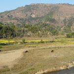 L'eau est partout au Nepal, ce qui manque dans ces zones montagneuses c'est la place pour cultiver.