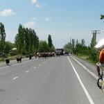 On croise de nombreux troupeaux sur les routes