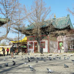 des moines qui sechent la priere pour nourrir les pigeons.