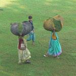 Des femmes qui portent l'herbe coupée