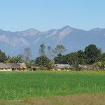 Hameau au milieu des champs de blé avec en arriere plans les prémices de la chaine de l'Himalaya