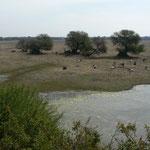Le Parc national de Bardia a coté d'Agra