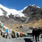La langue glaciere du Noijing vient presque lecher le col.