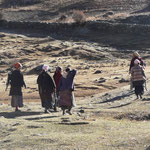 Les femmes partent au boulot, armées de leur serpe. Elles arborent toutes le tablier multicolore, typique du Tibet.