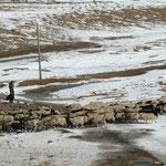 Entre les deux cols, un troupeau de moutons qui va passer un sale quart d'heure