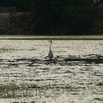 Un oiseau dans le parc national