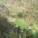 Au dessus d'Haridwar, on retrouve les champs en terrasse et le calme des montagnes