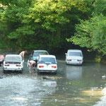 Pour echapper a la chaleur, un troupeau de Lada se rafraichit dans la riviere