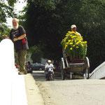 Blumenlieferung / flower delivery