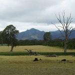 Grampian ranges