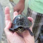 Schildkröten Zuchtstation
