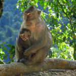 zum ersten Mal  Affen mit gutem Benimm  -  the first well behaved monkeys we have seen so far