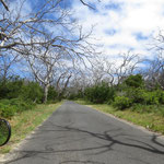 die Koalas haben diese Bäume totgefressen  -  the Koalas love these trees to death