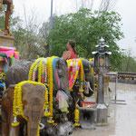 Ein Elefant für Buddha