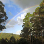 Regenbogen über Kerry's Garten  -  rainbow over Kerry's garden