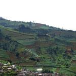Dieng plateau farming