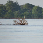 drift wood on the Mekong