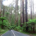 some more big trees  -  die sind auch ganz schön hoch