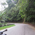 lovely winding jungle road
