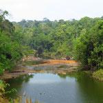 der übriggebliebene Dschungel ist wunderschön