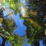 Bäume spiegeln sich im Wasser - tree reflexions in the water