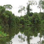 etwas echter Dschungel - some real primeval forest