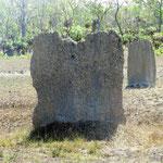 magnetische Termiten  -  magnetic termites
