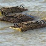 Aufbewahrung für frischen Fisch und Krebse - keeping fish and crabs fresh